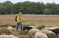 MAX Op stap met de herder